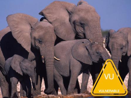 African_Elephant_7.27.2012_whytheymatter_HI_58709.jpg