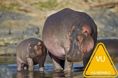hippo-facts-3.jpg