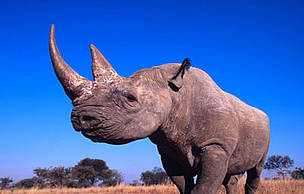 rhinocloseup_351196.jpg