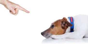 Confusion-About-Negative-Reinforcement-During-Dog-Training-1.jpg