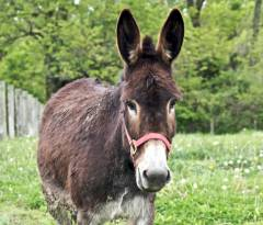donkey-vs-horse-2-Jean_Flickr.jpg