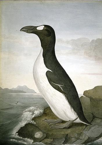 Great Auk Painting.preview.jpg