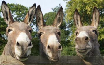 image-birmingham-donkeys-1465987874.jpg