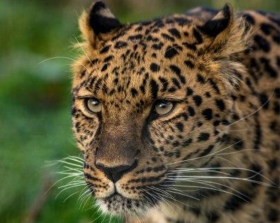 leopard-slider.jpg