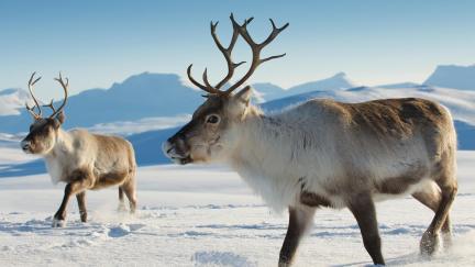 animals_hero_reindeer.jpg