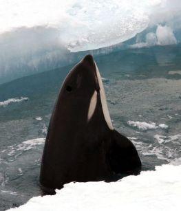 full_Paul_Ensor__Gateway_Antarctica__University_of_Canterbury_5322_small.jpg